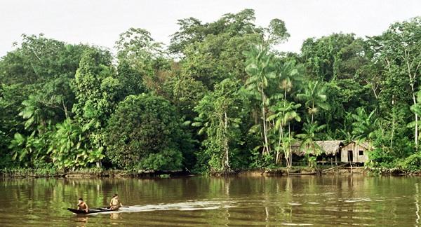 La Amazonia, La Víctima Silenciosa De La Campaña Electoral En Brasil