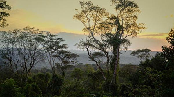 Una Red De Sensores Para Proteger La Selva Misionera