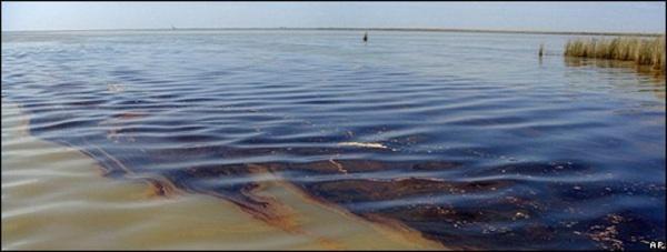¿Cuál Es El Verdadero Impacto De Un Derrame De Petróleo?