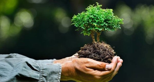 Proponen Usar Ingeniería Genética En Especies Para Combatir Cambio Climático