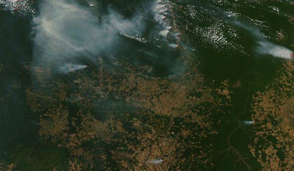 Brasil Rompe Récord En Deforestación