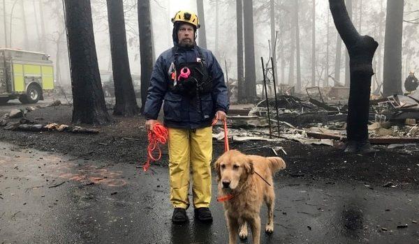 Después De Dos Semanas, Apagaron El Catastrófico Incendio En El Norte De California Que Dejó Al Menos 85 Muertos