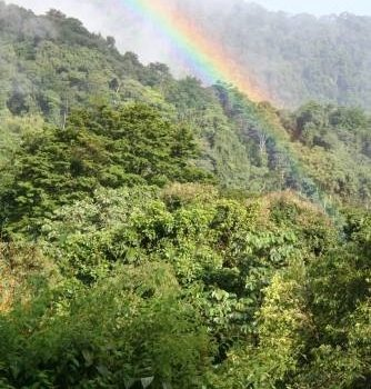 Los Bosques Tropicales Pueden Obstaculizar, En Lugar De Ayudar, Los Esfuerzos Contra El Cambio Climático