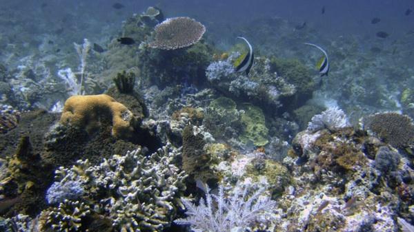 Larvas Criogenizadas, El Hito Científico Para Salvar Al Coral De La Extinción