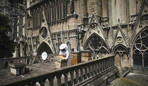 Abejas: Las Otras Víctimas Del Incendio De Notre Dame