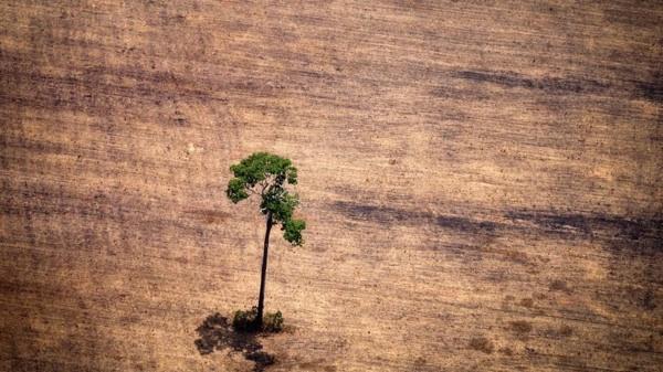 Cuáles Son Los Países Más Deforestados Del Mundo Y Cuántos Están En América Latina