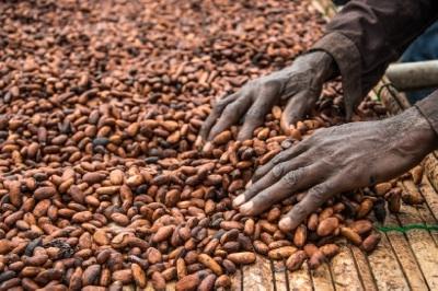 Mondelēz Apunta A La Sustentabilidad Del Chocolate