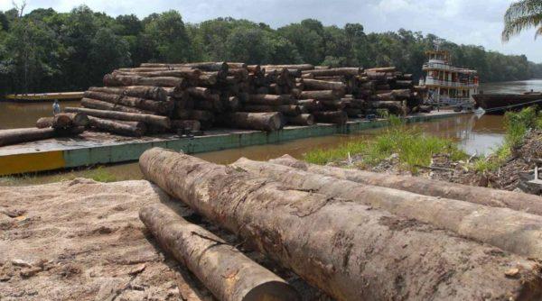¡Europa, Para De Importar Deforestación!