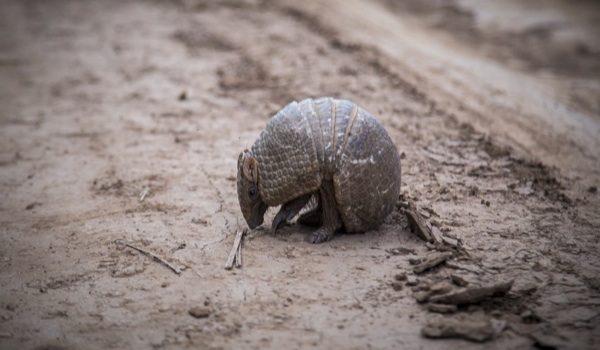 Cerca De 1 Millón De Especies En Peligro De Extinción, Según Informe Científico