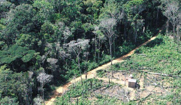 La ESA Observa Un Descenso En El Grado De Deforestación De Sudamérica