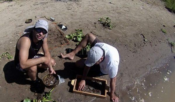 Los Sábalos Del Paraná Están Contaminados Microplástico