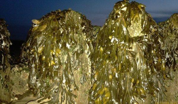 ¿Bolsas De Plástico Fabricadas Con Algas Marinas?