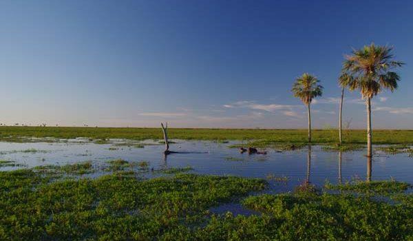 """Sumaron Una """"reserva Natural Silvestre"""" Al Parque Nacional Iberá"""