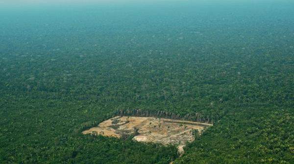 La Deforestación En La Amazonia Brasileña Aumentó En Julio Un 278% Más En Comparación Con El Año Anterior