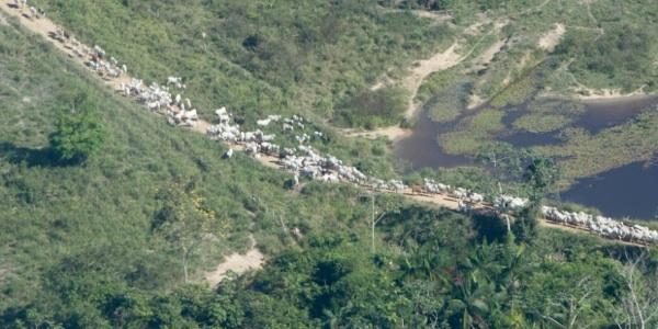 Bolsonaro Asegura Que Brasil No Necesita Fondos Alemanes Para Preservar La Amazonía