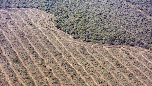 Greenpeace Sobrevoló Y Documentó Desmontes Ilegales Ganaderos De La Firma Cresud