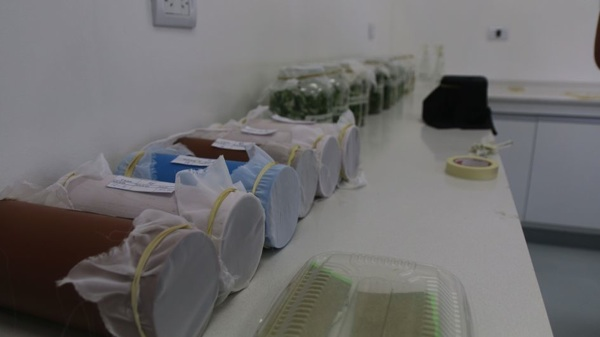 Mendoza: En Alvear Están Desarrollando Productos Biológicos Orgánicos