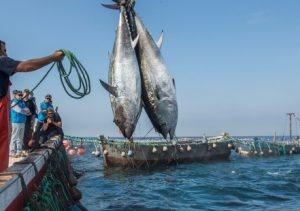 La Crisis Climática Aumenta Los Niveles De Mercurio En El Pescado